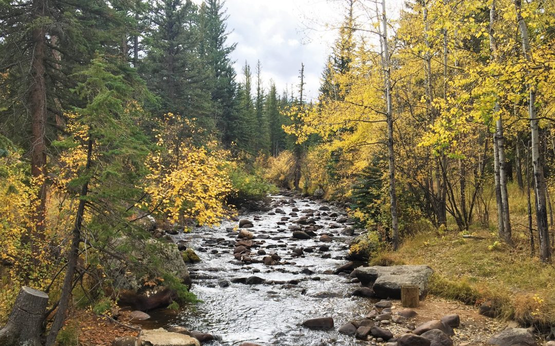 YMCA of the Rockies Preserves 127 Acres Next to RMNP